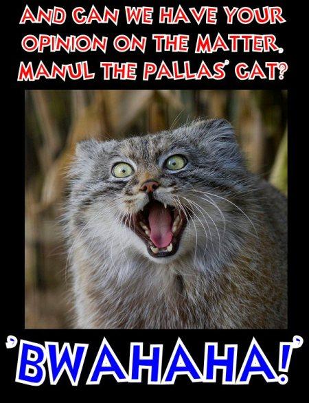 manul says bwahahahahah