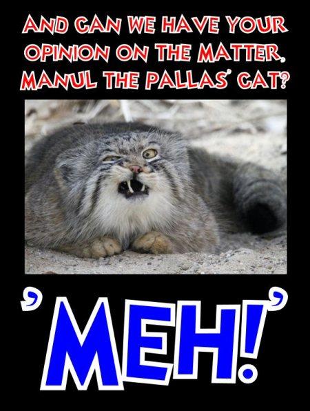 manul says meh