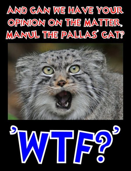 manul says wtf