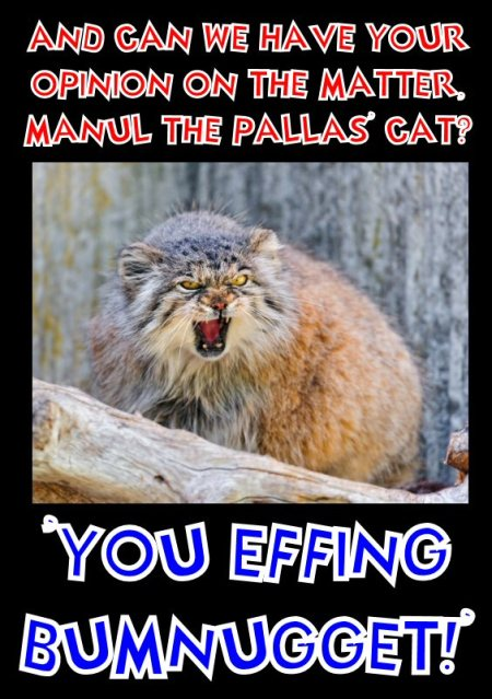 manul says you effing bumnugget