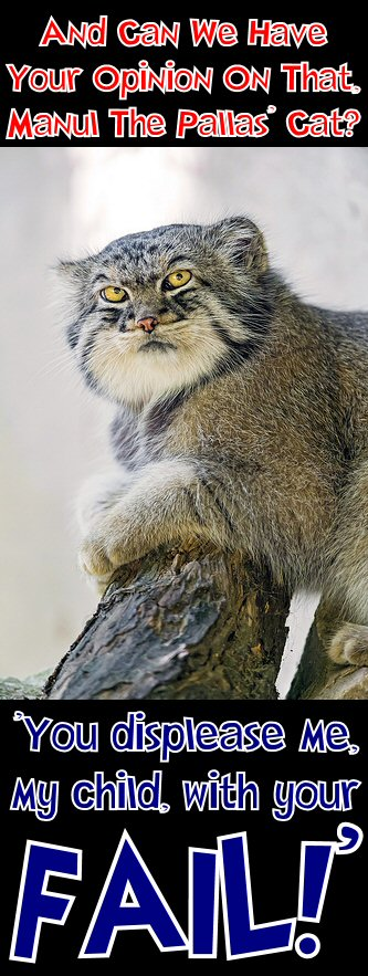 manul says you displease me with your fail