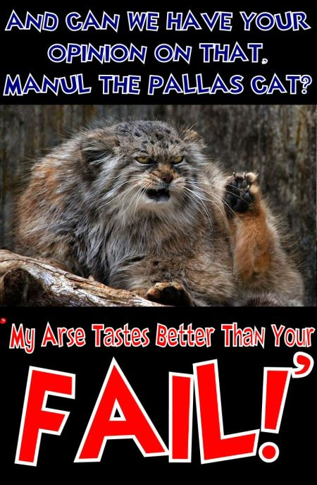 manul the pallas cat says my arse tastes better than your fail