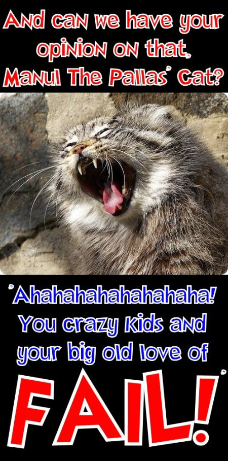 manul the pallas cat says you crazy kids and your big old love of fail
