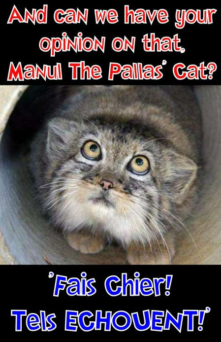 manul says fail in french