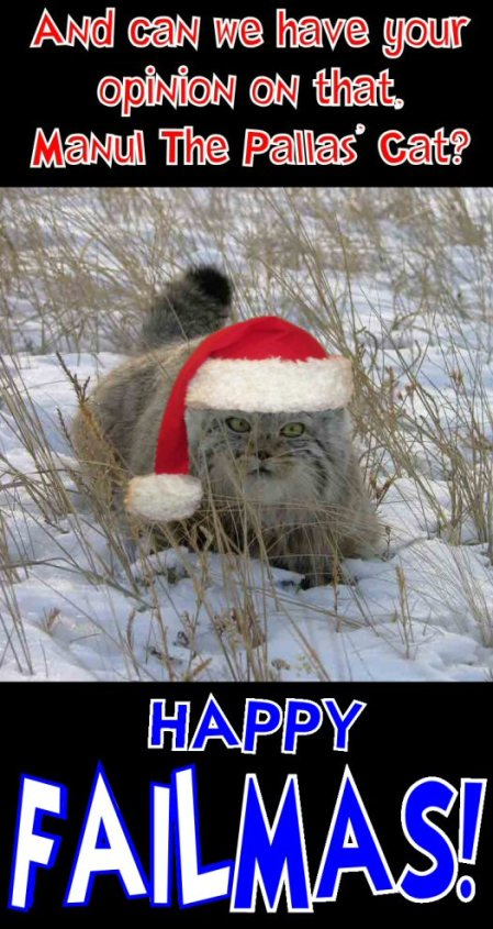 happy failmas from manul the pallas cat