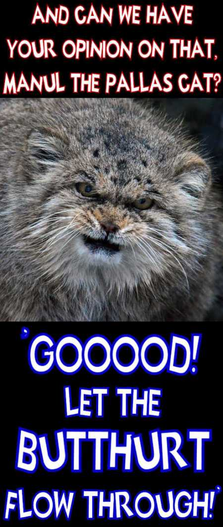 manul the pallas cat says good let the butthurt flow through