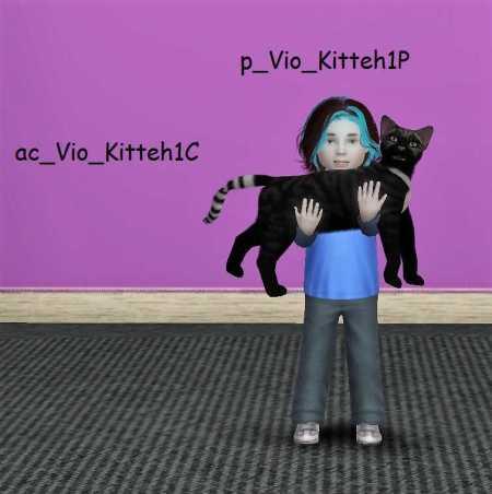 violincat-poses-a-problem-2